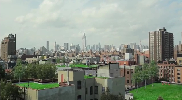 New Yorks grün Dächer